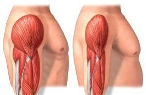 muscle mass degeneration
